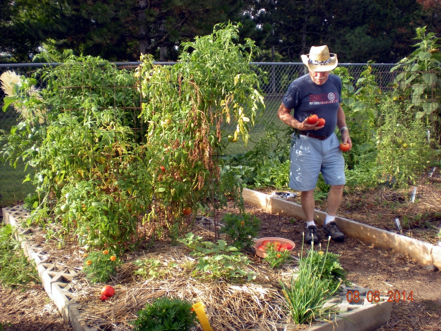 Pictures of a vegetable garden - Pictures Of A Vegetable Garden 16
